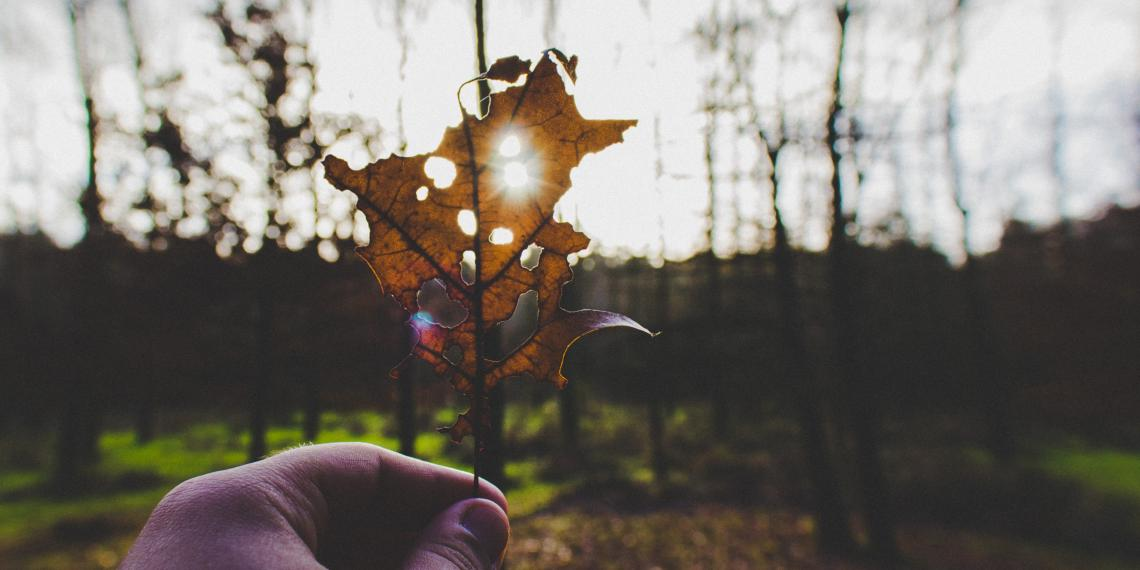 Leaf with light shining